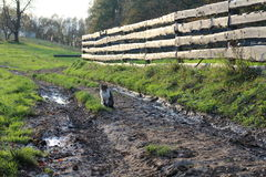 Cat on muddy footpath Royalty Free Stock Photography