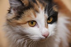 A cat with a multicolored royalty free stock photography