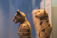 Cat mummies from egypt Royalty Free Stock Photo