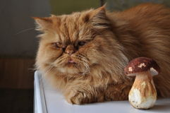 Cat and mushroom Stock Photos