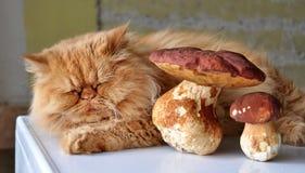 Cat and mushroom. Red cat lying beside mushroom Royalty Free Stock Photos