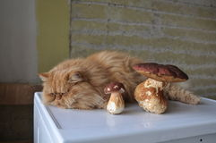 Cat and mushrooms Royalty Free Stock Image