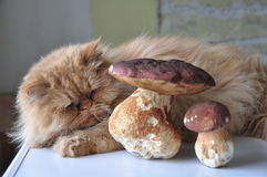 Cat and mushrooms Royalty Free Stock Photography