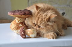 Cat and mushrooms Royalty Free Stock Images