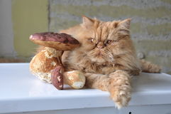 Cat and mushrooms stock images
