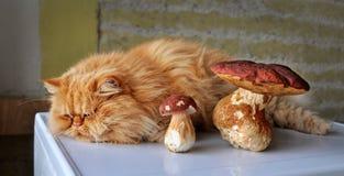 Cat and mushrooms Stock Photo