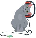 Cat music headphones. Gray cat listening to music on headphones Royalty Free Stock Image