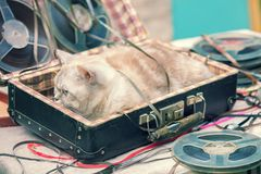 The cat lies in a suitcase with music reels. The cat music lover lies in a suitcase with music reels stock images