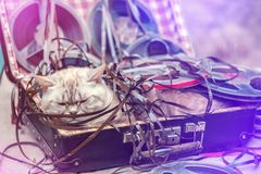 The cat lies in a suitcase with music reels. Siamese cat music lover lies in a suitcase with music reels stock photography