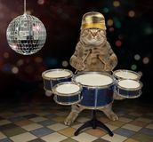 Cat plays the drums 2 royalty free stock images