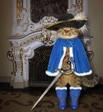 Cat in a blue cloak near a fireplace. The cat musketeer in a blue cloak and a black hat with a feather holds a sword near a fireplace in the castle royalty free stock photos