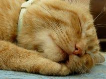 Cat muzzle Stock Images