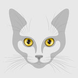 Cat muzzle with yellow eyes Stock Photos