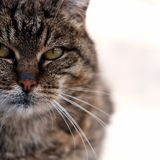 Cat. My cat Royalty Free Stock Images