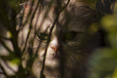 Cat. My cousin has this beautiful persian cat, i like too take pictures of this amazing creature Royalty Free Stock Image
