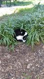 Cat. My cat sleping in bush Stock Photo