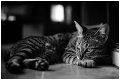 Cat. My cat wake up Stock Images