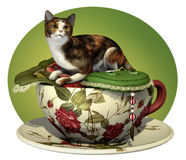 Cat n Cup Calico Stock Images