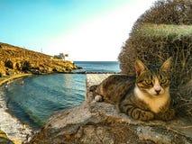 Cat n sea Royalty Free Stock Images
