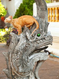 Cat on Naga in Wat Chiangman, Chiang Mai Royalty Free Stock Image