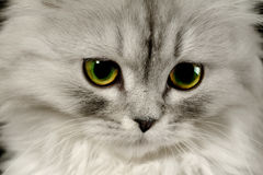 Cat by name Fine Royalty Free Stock Photography