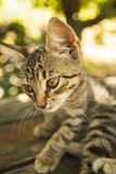 Cat without name Stock Images