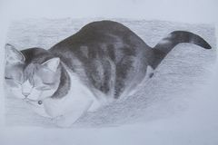 A cat named Bella. Graphite drawing of a cat. Seems to be sleeping, but actually she is not Stock Image
