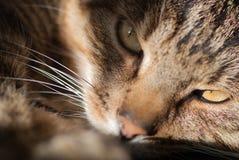 Cat Named Lucky. Closeup of furry cat named Lucky stock photo