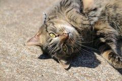 Cat Named Monster imagens de stock