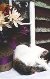 Cat Nap Fotografía de archivo