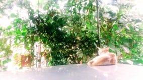 Cat Nap Imagen de archivo