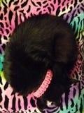 Cat Nap Stock Foto's