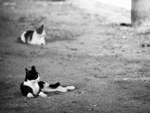 Cat Nap Royalty Free Stock Photos