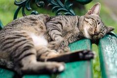 Cat Nap stockbild