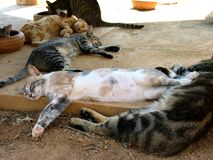 Cat nap. Cat shelter on Malta Stock Photography
