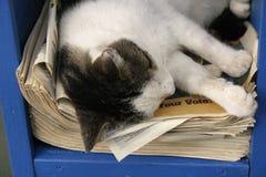 Cat nap. Cat sleeping on newspaper Stock Photo