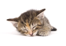 Cat nap Stock Photos