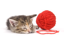 Cat nap Royalty Free Stock Photography