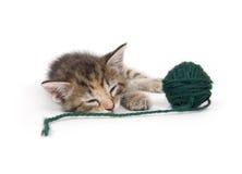Cat nap Royalty Free Stock Image