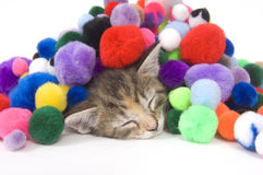 Cat nap Royalty Free Stock Images
