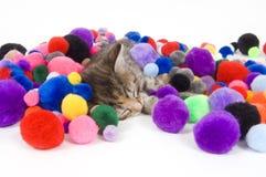 Cat nap Royalty Free Stock Photo