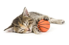 Cat nap Stock Photo