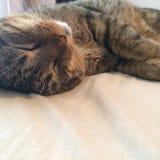 Cat Nap Lizenzfreie Stockfotografie