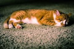 Cat Nap Photos stock