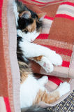 Cat nap Stock Images