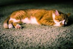 Cat Nap. Orange cat taking a nap on the rug Stock Photos
