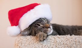 Cat Nap Time med en Santa Hat arkivbild