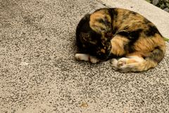 Cat napping. Calico feral cat asleep on the sidewalk Stock Image