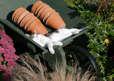 Cat napping Royalty Free Stock Image