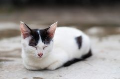 Cat napping on the floor. White cat with black spots crouch  and fall asleep on a cement floor outdoor, natural light Stock Image
